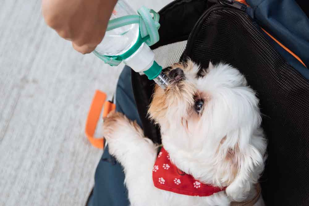 drinking-dog_stick-pack_pet-flexible-packaging